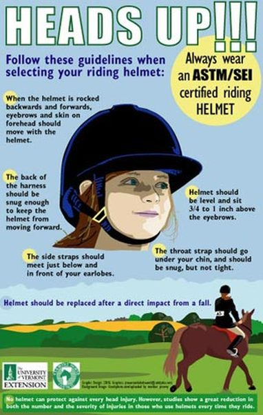 photo How to Lead a Horse